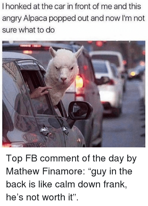 """Memes, Angry, and Alpaca: I honked at the car in front of me and this  angry Alpaca popped out and now I'm not  sure what to do Top FB comment of the day by Mathew Finamore: """"guy in the back is like calm down frank, he's not worth it""""."""