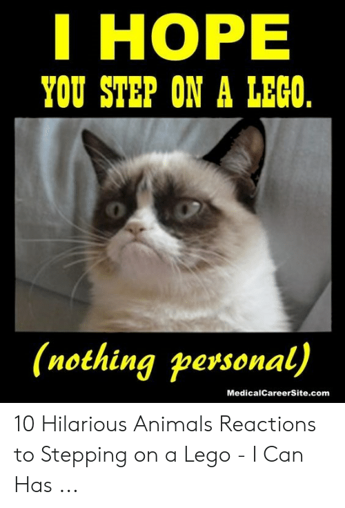 Hilarious Animals: I HOPE  YOU STEP ON A LECO  (nothing personal)  MedicalCareerSite.com 10 Hilarious Animals Reactions to Stepping on a Lego - I Can Has ...