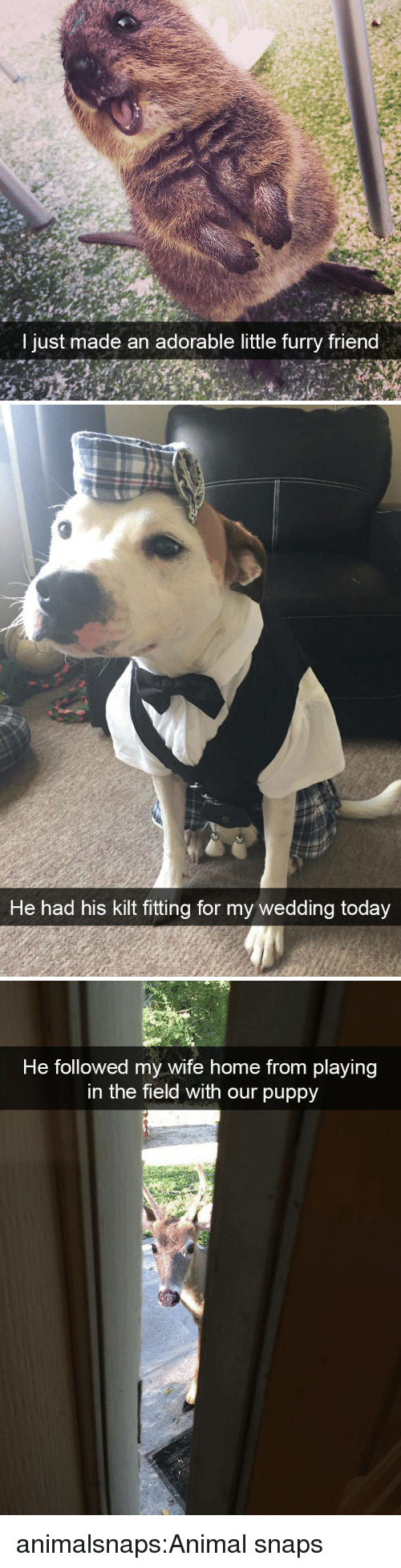kilt: I jus  t m  ade an adorable little furry friend   He had his kilt fitting for my wedding today   He followed my wife home from playing  in the field with our puppy animalsnaps:Animal snaps