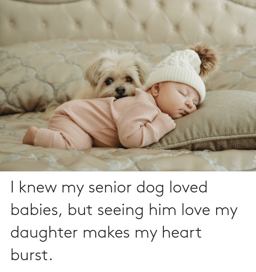 Love My Daughter: I knew my senior dog loved babies, but seeing him love my daughter makes my heart burst.