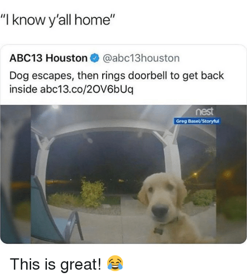 """Memes, Abc13, and Home: """"I know y'all home""""  ABC13 Houston @abc13houston  Dog escapes, then rings doorbell to get back  inside abc13.co/20V6bUq  nest  Greg Basel/Storyful This is great! 😂"""