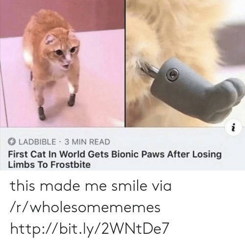 In World: i  LADBIBLE 3 MIN READ  First Cat In World Gets Bionic Paws After Losing  Limbs To Frostbite this made me smile via /r/wholesomememes http://bit.ly/2WNtDe7
