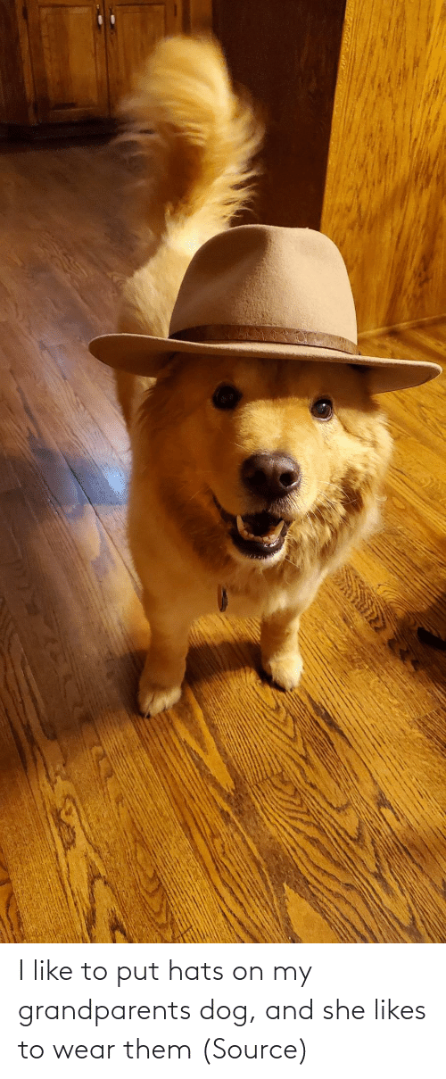 Put: I like to put hats on my grandparents dog, and she likes to wear them (Source)