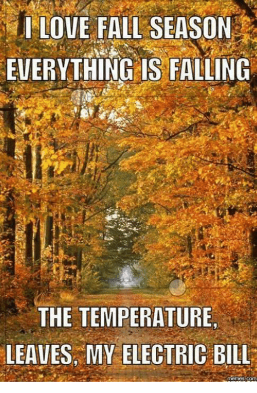 fall season: I LOVE FALL SEASON  EVERYTHING IS FALLING  THE TEMPERATURE  LEAVES MY ELECTRIC BILL