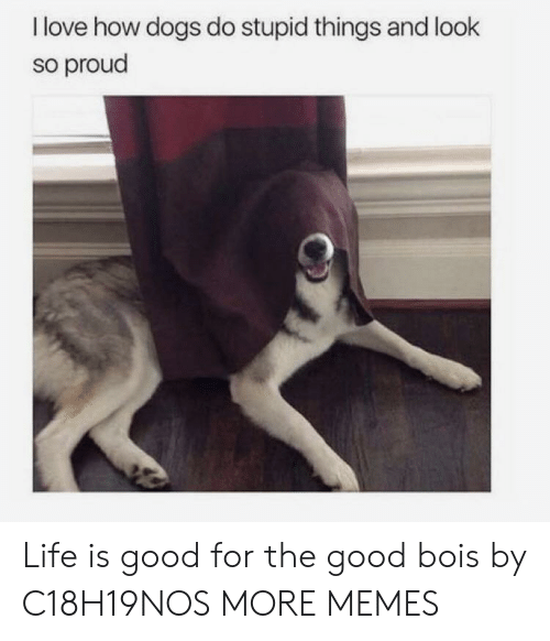 Dank, Dogs, and Life: I love how dogs do stupid things and look  so proud Life is good for the good bois by C18H19NOS MORE MEMES