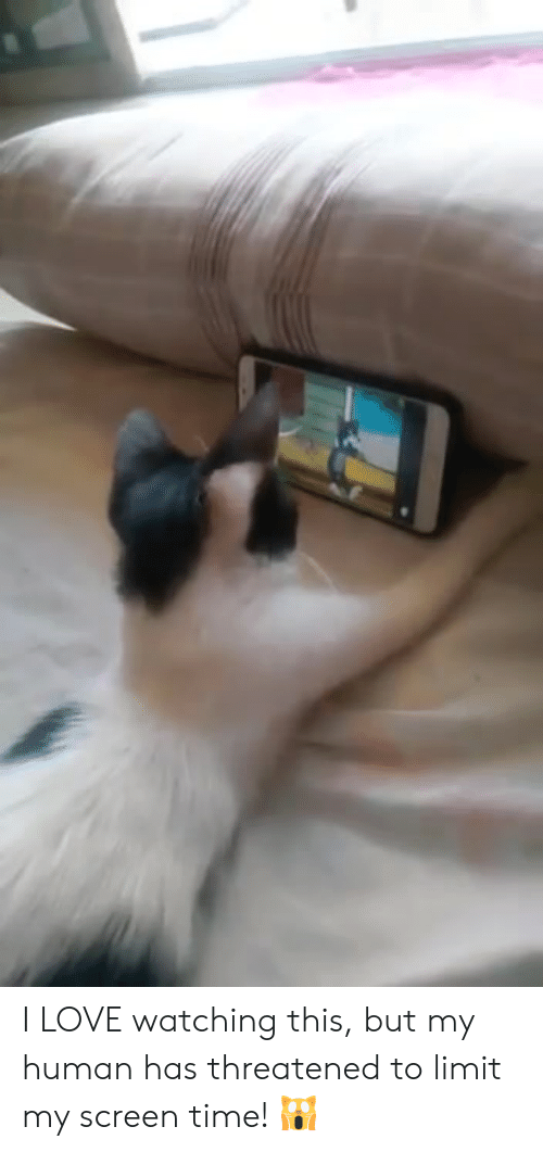 Love, Memes, and Time: I LOVE watching this, but my human has threatened to limit my screen time! 🙀