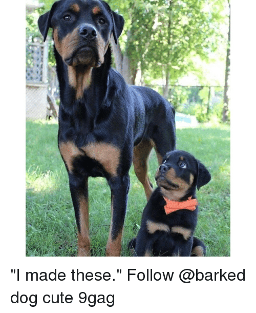 """9gag, Cute, and Memes: """"I made these."""" Follow @barked dog cute 9gag"""