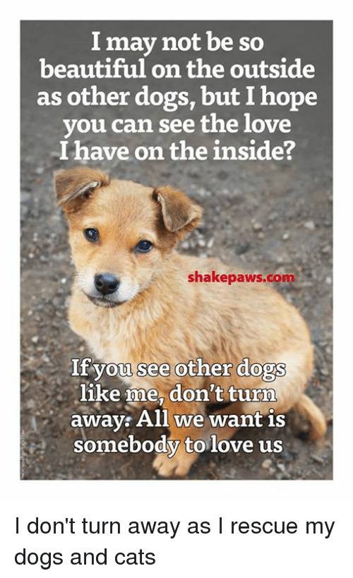 dog-and-cats: I may not be so  beautiful on the outside  as other dogs, but Ihope  you can see the love  I have on the inside?  shakepa  If you see other dogs  like me, don't turn  away: All we want is  somebody to love us I don't turn away as I rescue my dogs and cats