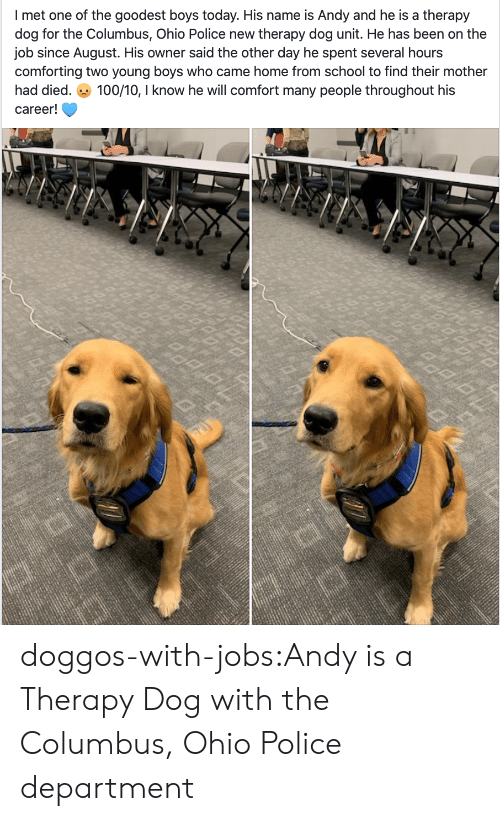 Police, School, and Tumblr: I met one of the goodest boys today. His name is Andy and he is a therapy  dog for the Columbus, Ohio Police new therapy dog unit. He has been on the  job since August. His owner said the other day he spent several hours  comforting two young boyss who came home from school to find their mother  100/10, I know he will comfort many people throughout his  had died.  career! doggos-with-jobs:Andy is a Therapy Dog with the Columbus, Ohio Police department