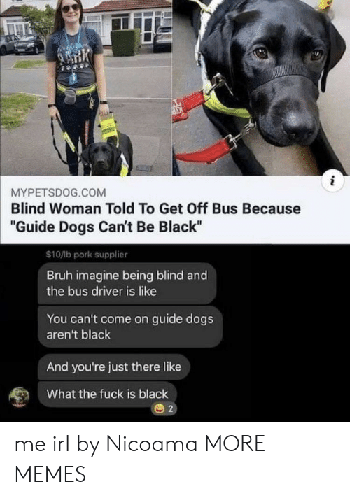 "Bruh, Dank, and Dogs: i  MYPETSDOG.COM  Blind Woman Told To Get Off Bus Because  ""Guide Dogs Can't Be Black""  $10/lb pork supplier  Bruh imagine being blind and  the bus driver is like  You can't come on guide dogs  aren't black  And you're just there like  What the fuck is black  2 me irl by Nicoama MORE MEMES"