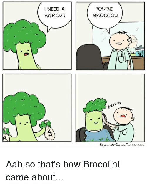 Cute, Funny, and Haircut: I NEED A  HAIRCUT  YOURE  BROCCOLI  27  Blazer A+Dawn Tumblr.com Aah so that's how Brocolini came about...
