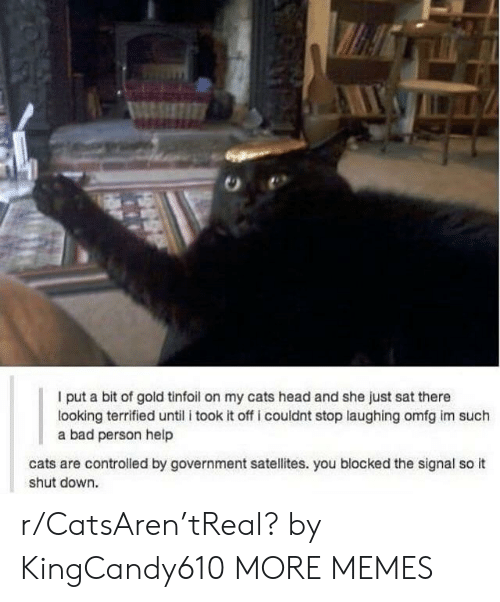 Controlled: I put a bit of gold tinfoil on my cats head and she just sat there  looking terrified until i took it off i couldnt stop laughing omfg im such  a bad person help  cats are controlled by government satellites. you blocked the signal so it  shut down. r/CatsAren'tReal? by KingCandy610 MORE MEMES
