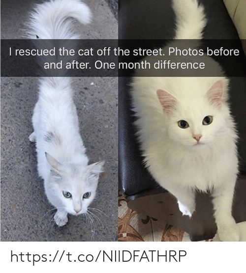 before and after: I rescued the cat off the street. Photos before  and after. One month difference https://t.co/NIIDFATHRP