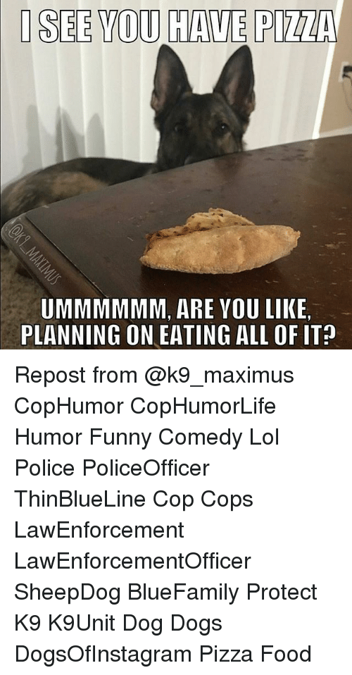 Maximus: I SEE YOU HAVE PIZZA  UMMMMMM, ARE VOU LIKE  PLANNING ON EATING ALL OF IT? Repost from @k9_maximus CopHumor CopHumorLife Humor Funny Comedy Lol Police PoliceOfficer ThinBlueLine Cop Cops LawEnforcement LawEnforcementOfficer SheepDog BlueFamily Protect K9 K9Unit Dog Dogs DogsOfInstagram Pizza Food