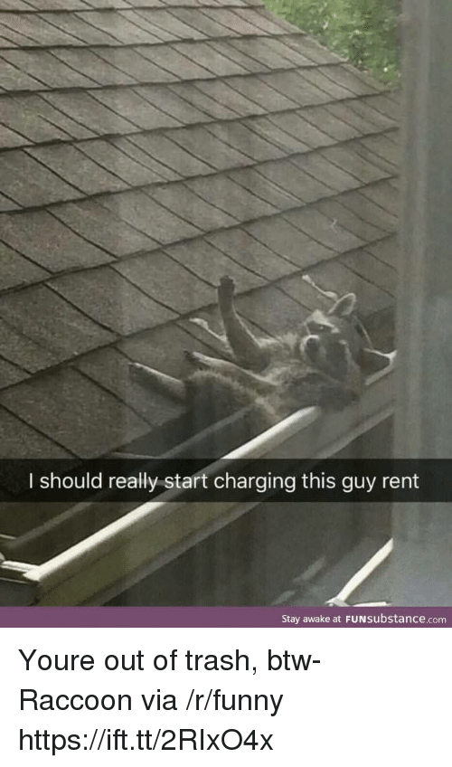 Stay Awake: I should really start charging this guy rent  Stay awake at FUNSubstance.com Youre out of trash, btw-Raccoon via /r/funny https://ift.tt/2RIxO4x