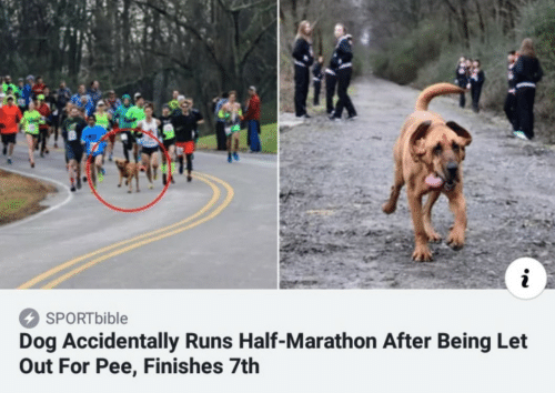 Bible, Dog, and Marathon: i  SPORT bible  Dog Accidentally Runs Half-Marathon After Being Let  Out For Pee, Finishes 7th