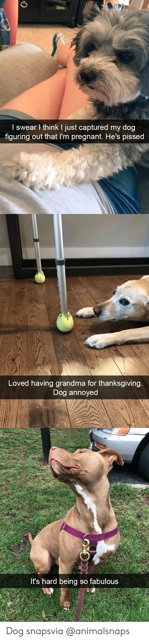 Grandma, Target, and Thanksgiving: I swear l think I just captured my dog  figuring out that I'm preanant, He's pissed   Loved having grandma for thanksgiving  Dog annoyed   t's hard being so fabulous Dog snapsvia @animalsnaps