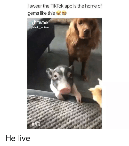 Memes, Black, and Home: I swear the TikTok app is the home of  gems like this  TikTok  @black whitee He live