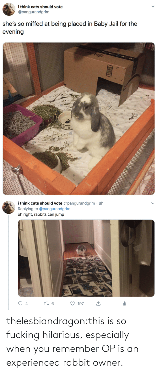 rabbits: i think cats should vote  @pangurandgrim  she's so miffed at being placed in Baby Jail for the  evening   i think cats should vote @pangurandgrim· 8h  Replying to @pangurandgrim  jump  oh right, rabbits can  li  27 6  197  4 thelesbiandragon:this is so fucking hilarious, especially when you remember OP is an experienced rabbit owner.