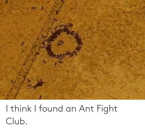 Think I: I think I found an Ant Fight Club.