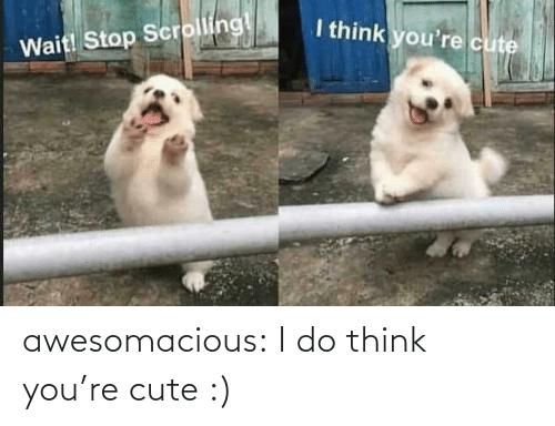 Think You: I think you're cute  Wait! Stop Scrolling! awesomacious:  I do think you're cute :)