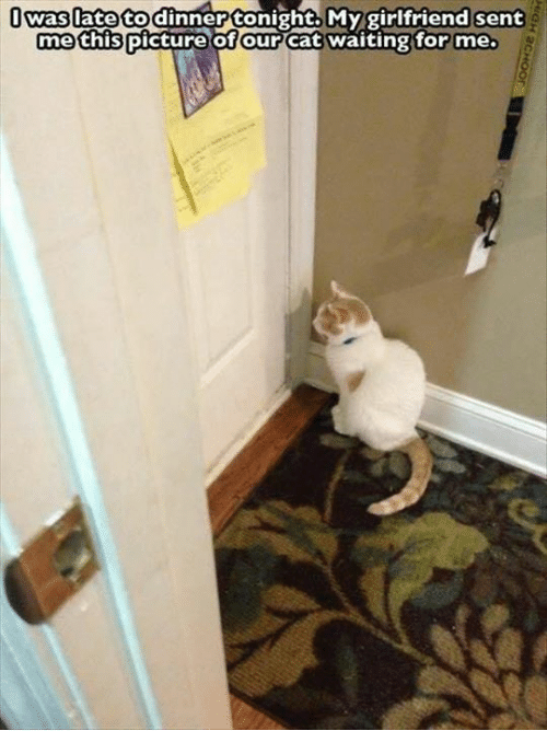 Cats, Memes, and Girlfriend: I to dinner tonight. My girlfriend sent  Waslate me this picture of our  Cat waiting for me.