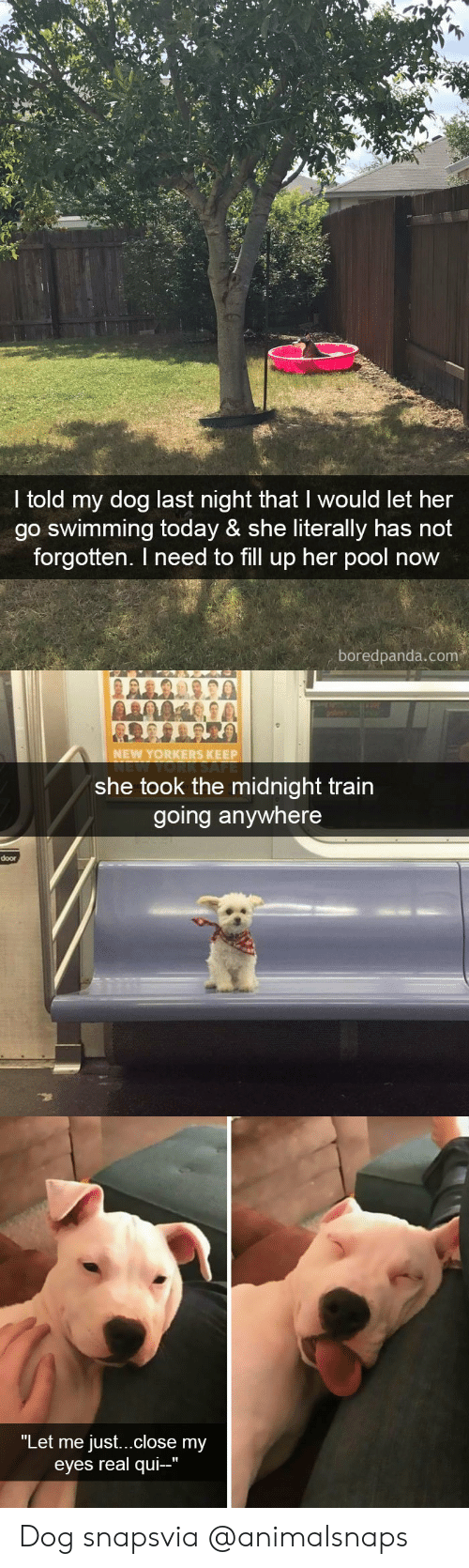 """Target, Tumblr, and Http: I told my dog last night that I would let her  go swimming today & she literally has not  forgotten. I need to fill up her pool now  boredpanda.com   NEW YORKERS KEEP  she took the midnight train  going anywhere  door   """"Let me just...close my  eyes real qui-"""" Dog snapsvia @animalsnaps"""