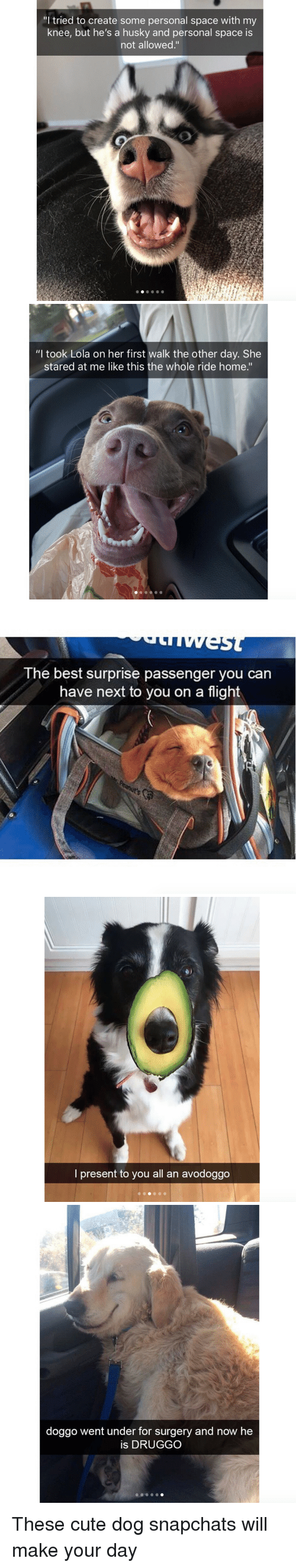 """lola: """"I tried to create some personal space with my  knee, but he's a husky and personal space is  not allowed.""""   """"l took Lola on her first walk the other day. She  stared at me like this the whole ride home.""""   The best surprise passenger you can  have next to you on a flight   o)  l present to you all an avodoggo   doggo went under for surgery and now he  is DRUGGO <p>These cute dog snapchats will make your day<br/></p>"""