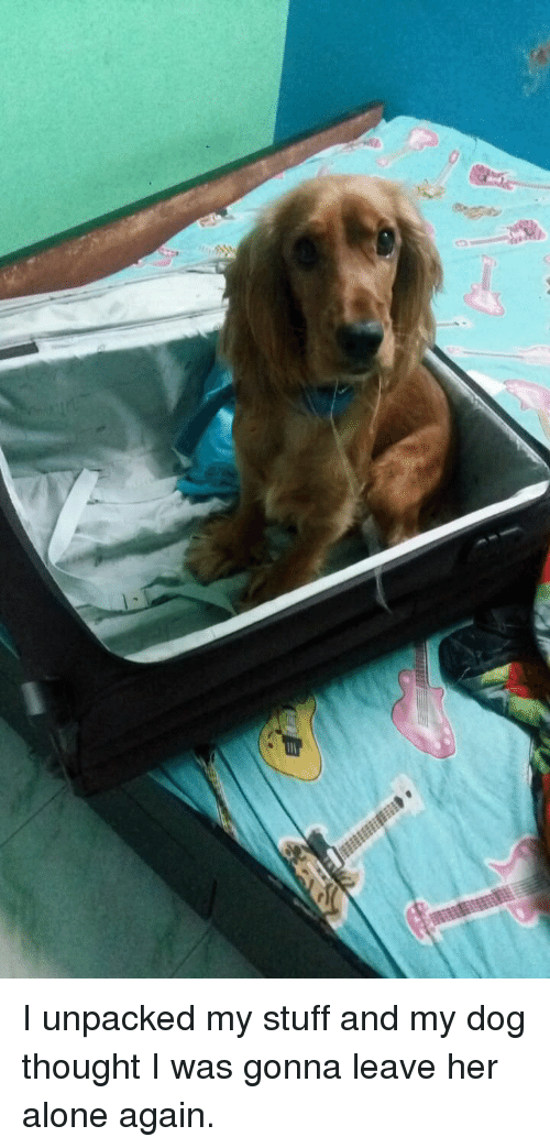 Leave Her Alone: I unpacked my stuff and my dog thought I was gonna leave her alone again.