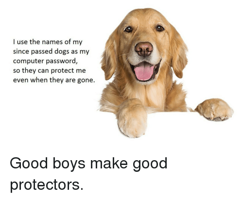 Protect Me: I use the names of my  since passed dogs as my  computer password,  so  they can protect me  even when they are gone. <p>Good boys make good protectors.</p>