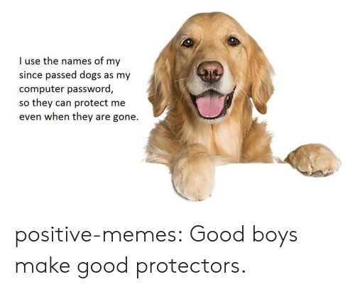 Protect Me: I use the names of my  since passed dogs as my  computer password,  so they can protect me  even when they are gone. positive-memes:  Good boys make good protectors.