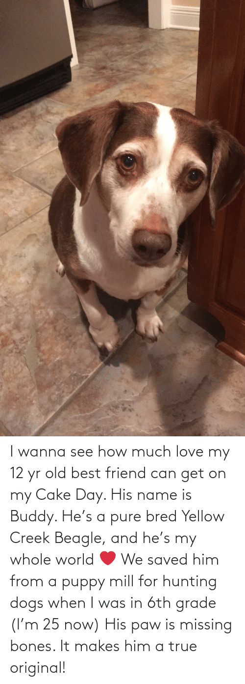 Can Get: I wanna see how much love my 12 yr old best friend can get on my Cake Day. His name is Buddy. He's a pure bred Yellow Creek Beagle, and he's my whole world ❤️ We saved him from a puppy mill for hunting dogs when I was in 6th grade (I'm 25 now) His paw is missing bones. It makes him a true original!