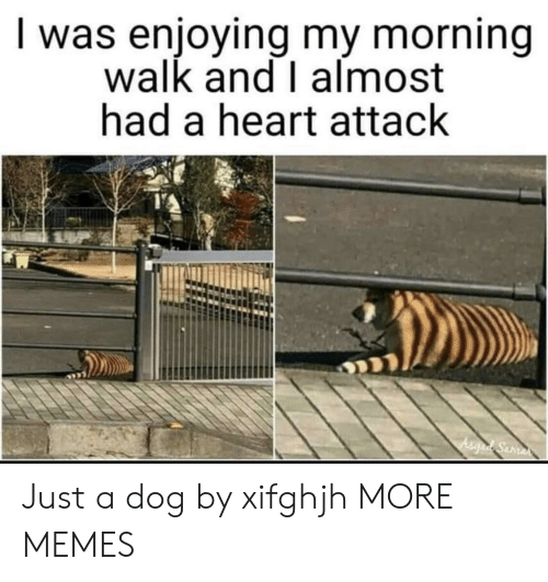Dank, Memes, and Target: I was enjoying my morning  walk and I almost  had a heart attack Just a dog by xifghjh MORE MEMES