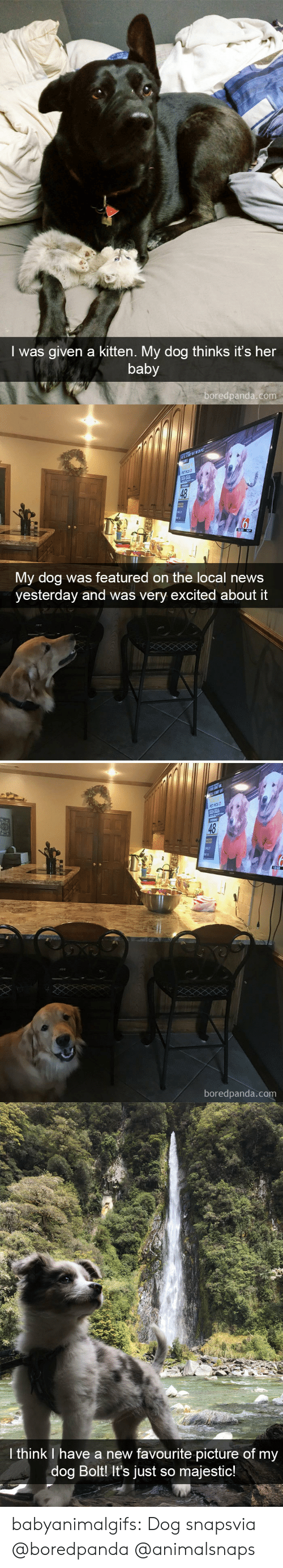 Was Given: I was given a kitten. My dog thinks it's her  baby  boredpanda.com   48  My dog was featured on the local news  yesterday and was very excited about it  boredpanda.com   I think I have a new favourite picture of my  dog Bolt It's just so majestic! babyanimalgifs:  Dog snapsvia @boredpanda@animalsnaps