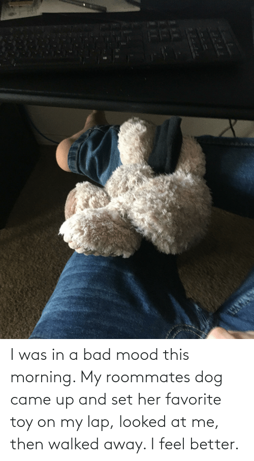 this morning: I was in a bad mood this morning. My roommates dog came up and set her favorite toy on my lap, looked at me, then walked away. I feel better.