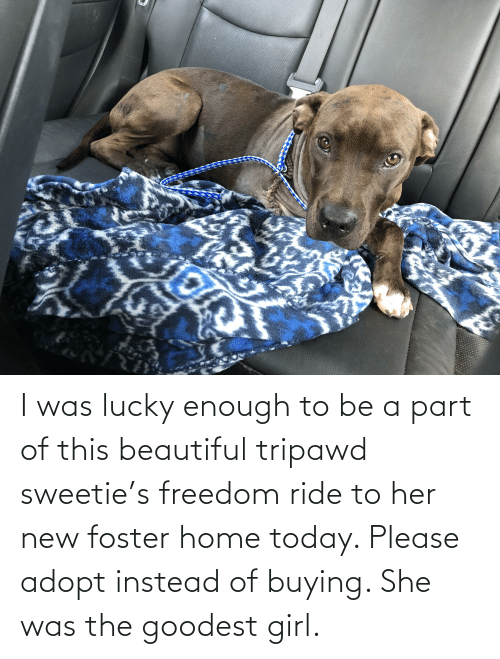Buying: I was lucky enough to be a part of this beautiful tripawd sweetie's freedom ride to her new foster home today. Please adopt instead of buying. She was the goodest girl.