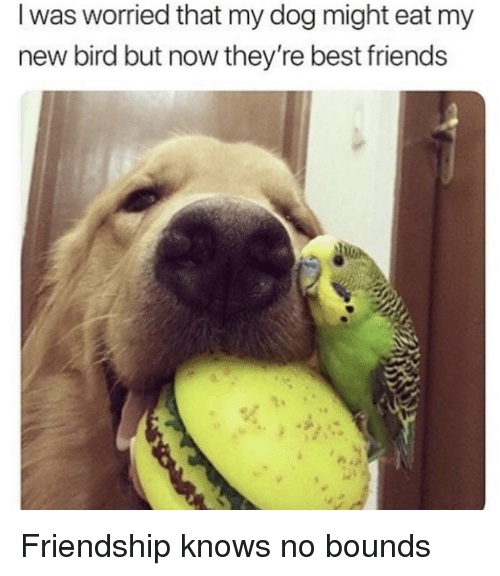 Friends, Best, and Friendship: I was worried that my dog might eat my  new bird but now they're best friends <p>Friendship knows no bounds</p>
