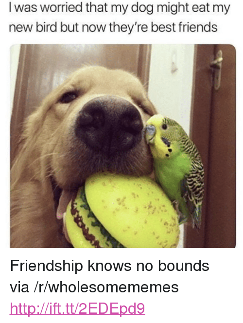 "Friends, Best, and Http: I was worried that my dog might eat my  new bird but now they're best friends <p>Friendship knows no bounds via /r/wholesomememes <a href=""http://ift.tt/2EDEpd9"">http://ift.tt/2EDEpd9</a></p>"