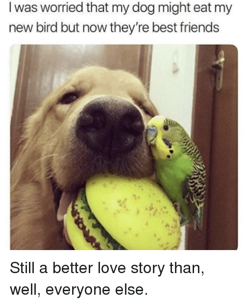 Friends, Love, and Best: I was worried that my dog might eat my  new bird but now they're best friends Still a better love story than, well, everyone else.