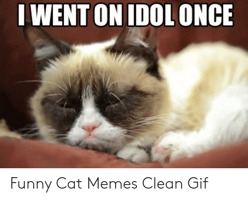 I Went On Idolonce Funny Cat Memes Clean Gif Funny Meme On