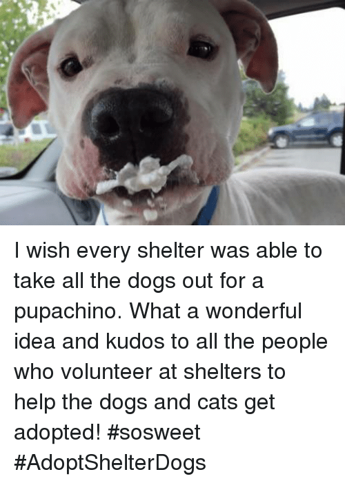 dog-and-cats: I wish every shelter was able to take all the dogs out for a pupachino. What a wonderful idea and kudos to all the people who volunteer at shelters to help the dogs and cats get adopted! #sosweet #AdoptShelterDogs