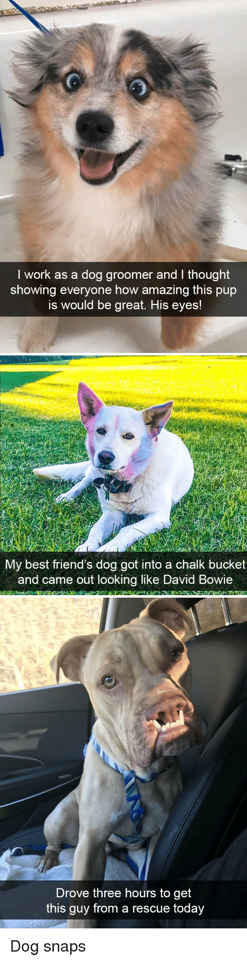 Friends, Work, and Best: I work as a dog groomer and I thought  showing everyone how amazing this pup  is would be great. His eyes!   My best friend's dog got into a chalk bucket  and came out looking like bavid Bowie   Drove three hours to get  this guy from a rescue today Dog snaps