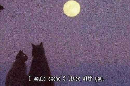 You, With You, and I Would: I would spend 9 lives with you