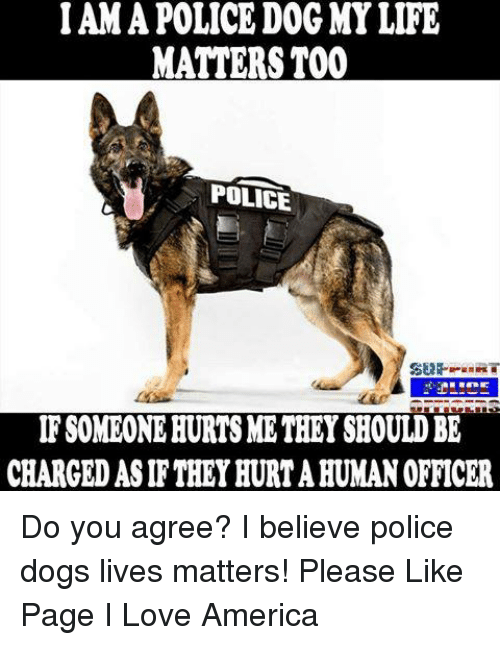 iama: IAMA POLICE DOG MY LIFE  MATTERS TOO  POLICE  SEAR.  IF SOMEONEHURTSME THEY SHOULD BE  CHARGED ASIF THEY HURTAHUMANOFFICER Do you agree?  I believe police dogs lives matters!  Please Like Page I Love America