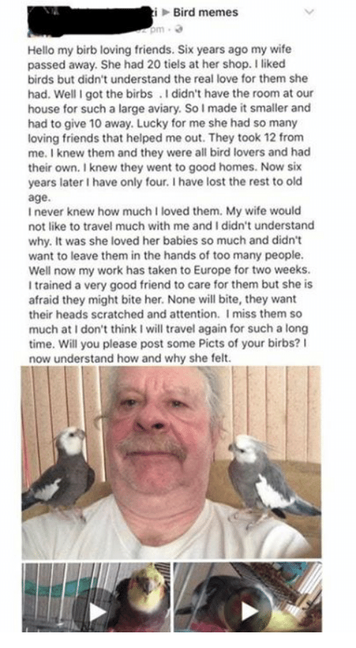 Lovedating: iBird memes  Hello my birb loving friends. Six years ago my wife  passed away. She had 20 tiels at her shop. I liked  birds but didn't understand the real love for them she  had. Well I got the birbs.I didn't have the room at our  house for such a large aviary. So I made it smaller and  had to give 10 away. Lucky for me she had so many  loving friends that helped me out. They took 12 from  me. I knew them and they were all bird lovers and had  their own. I knew they went to good homes. Now six  years later I have only four. I have lost the rest to old  age.  I never knew how much I loved them. My wife would  not like to travel much with me and I didn't understand  why. It was she loved her babies so much and didn't  want to leave them in the hands of too many people.  Well now my work has taken to Europe for two weeks.  I trained a very good friend to care for them but she is  afraid they might bite her. None will bite, they want  their heads scratched and attention. Imiss them so  much at I don't think I will travel again for such a long  time. Will you please post some Picts of your birbs? I  now understand how and why she felt.