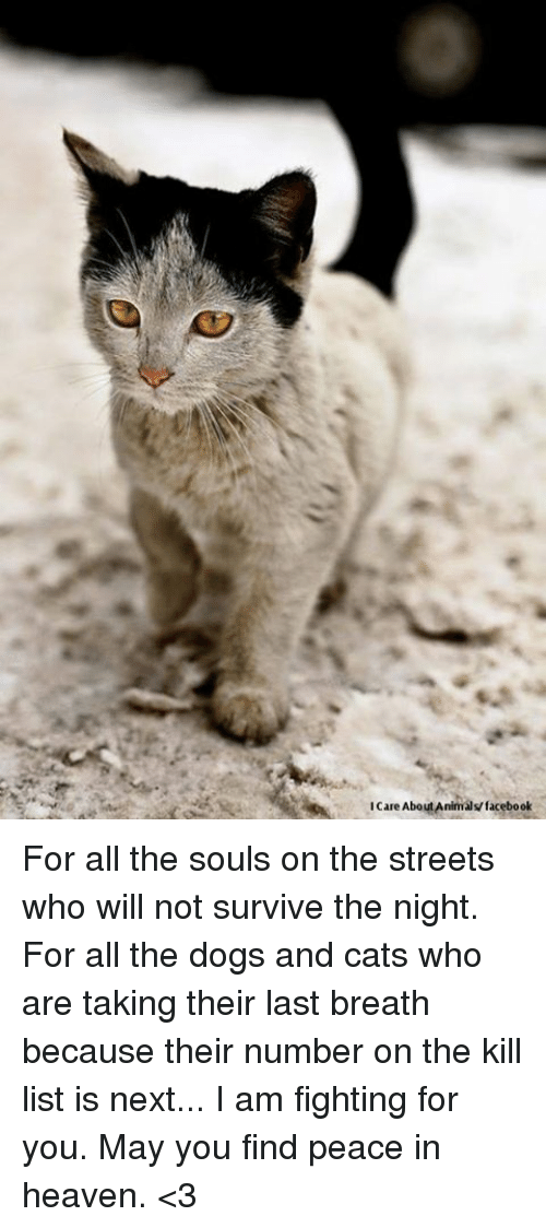 dog-and-cats: icare About Animals facebook For all the souls on the streets who will not survive the night. For all the dogs and cats who are taking their last breath because their number on the kill list is next... I am fighting for you. May you find peace in heaven. <3