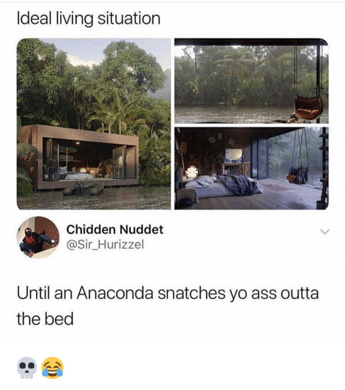 Anaconda, Ass, and Memes: Ideal living situation  Chidden Nuddet  @Sir Hurizzel  Until an Anaconda snatches yo ass outta  the bed 💀😂