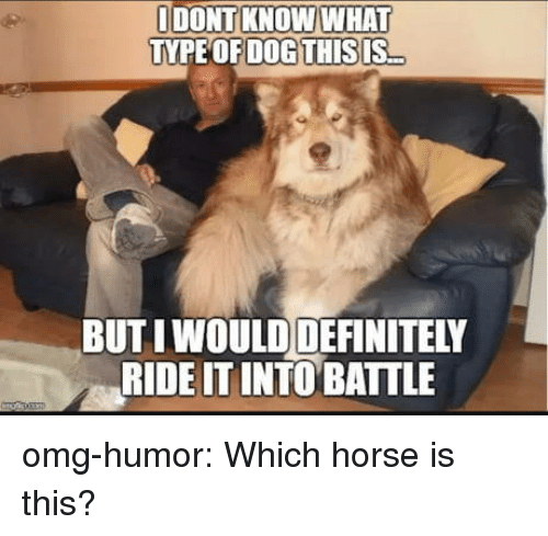 Definitely, Omg, and Tumblr: IDONT KNOW WHAT  TYPE OFDOGTHİSIS  BUT IWOULD DEFINITELY  RIDE ITINTO BATTLE omg-humor:  Which horse is this?