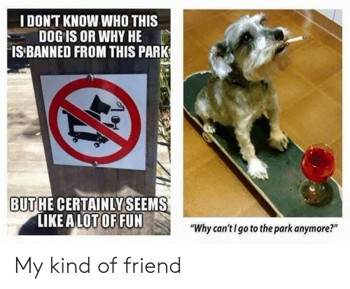 """Dog, Fun, and Who: IDONT KNOW WHO THIS  DOG IS OR WHY HE  IS BANNED FROM THIS PARK  BUTHE CERTAINLYSEEMS  LIKE A LOT OF FUN  """"Why can'tI go to the park anymore?"""" My kind of friend"""