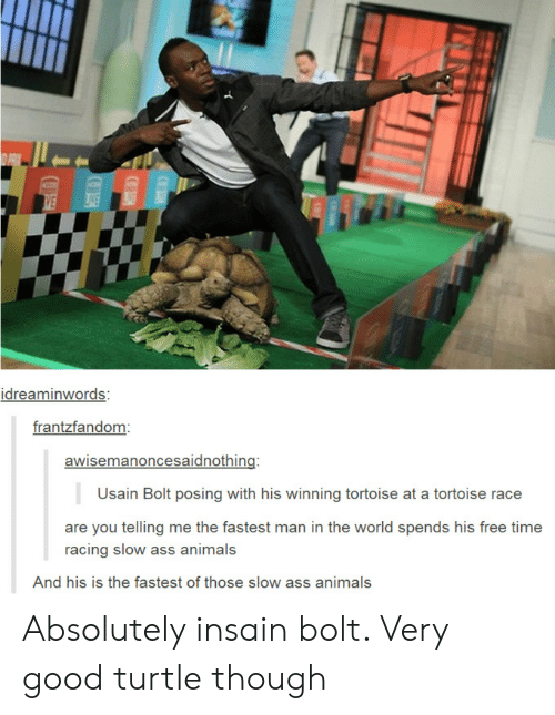 Man In The World: idreaminwords:  frantzfandom  awisemanoncesaidnothing:  Usain Bolt posing with his winning tortoise at a tortoise race  are you telling me the fastest man in the world spends his free time  racing slow ass animals  And his is the fastest of those slow ass animals Absolutely insain bolt. Very good turtle though